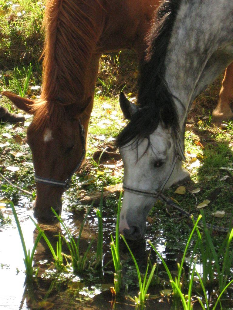 Horses in Dordogne